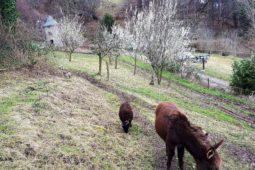 Nuit_insolite_perchoir_des_pyrenees_animaux_printemps